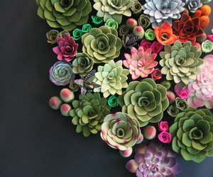 flowers, plants, and succulent image