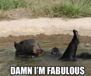 fabulous, bear, and funny image
