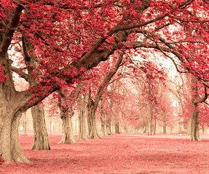 autumn, dve srca, and nature image