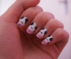 cow and nails image