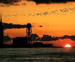 birds, black sea, and clouds image