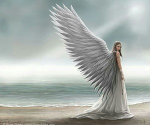 angel and wingz image