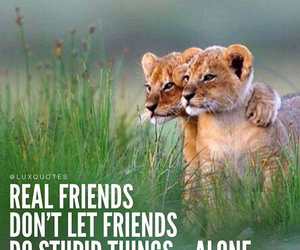 stupid, friends, and alone image