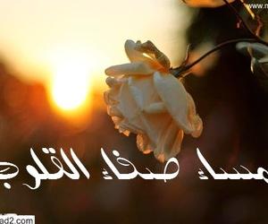 ورود, صباح الخير, and زهرة image