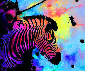 zebra, art, and colors image