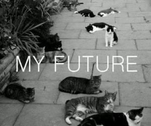 cats, pretoebranco, and cute image