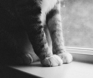 cats and pretty image
