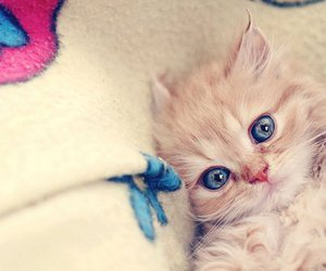blue, cute, and cat image