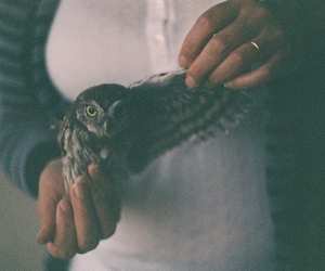 baby, litte, and owl image