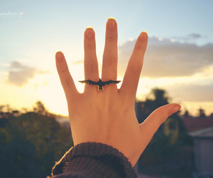 ring, bird, and hand image