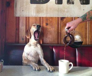 dog, coffee, and morning image