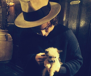 beautiful, dogs, and tommo image