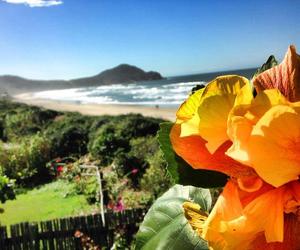 beach, brasil, and sun image