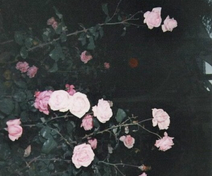 flowers, foggy, and pale image