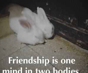 bunny, fact, and friendship image