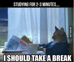 cat, funny, and study image