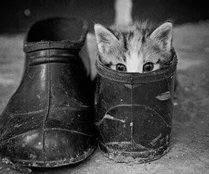 cat, shoes, and love image