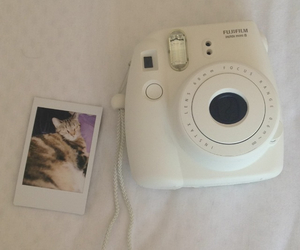 camera, love, and cat image