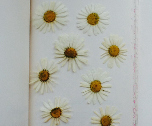 circles, daisy, and flower image