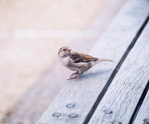 bird, animal, and photography image