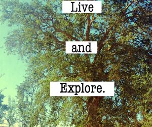 explore, live, and tree image