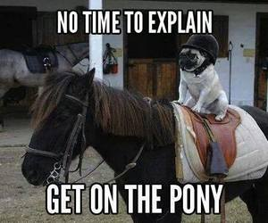 horse, dog, and funny image