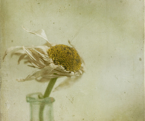bottle, daisy, and dead image