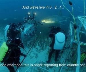 funny, lol, and ocean image
