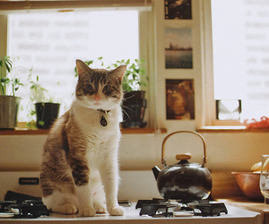 cat, vintage, and kitchen image