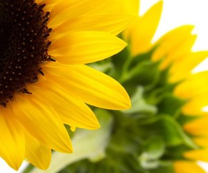 flowers, happiness, and sunflower image