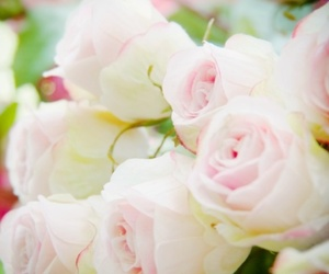 pink, roses, and flowers image
