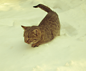 cat, cats, and snow image
