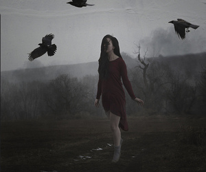 crows, gothic, and dark image