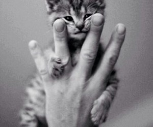 cat, beautiful, and hand image