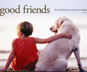 dog, cute, and good friends image