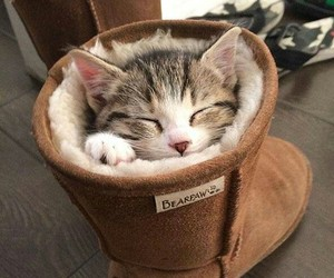 awww, cat, and uggs image