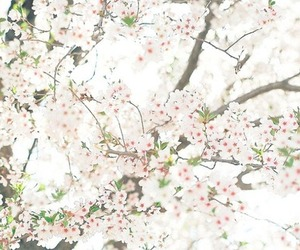 flowers, japan, and spring image