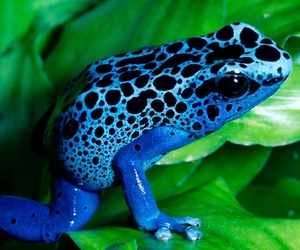 blue and frog image