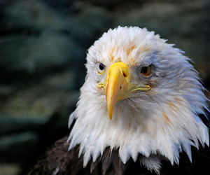 alaska, bird, and wild image