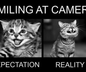 cat, smile, and reality image