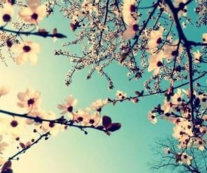 flowers, sky, and blossom image