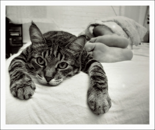 black and white, cat, and feet image