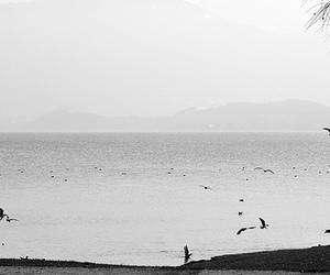 beach, landscape, and birds image