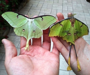 butterfly, green, and wings image
