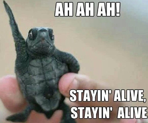 turtle, funny, and meme image
