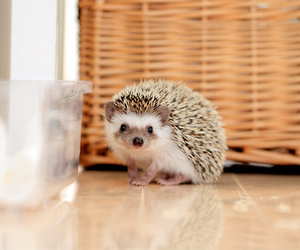 awesome, hedgehog, and small image