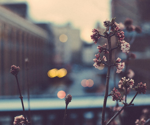flowers, city, and nature image
