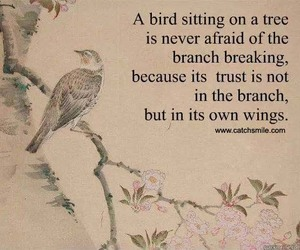 bird, quote, and trust image