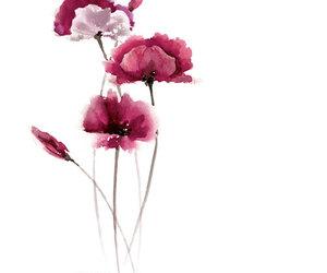 drawning, Papaver, and flower image