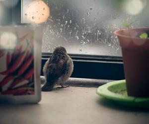 bird, rain, and sparrow image